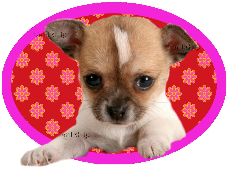 Strijkapplicatie Hondje Chihuahua Ovaal Gebloemd